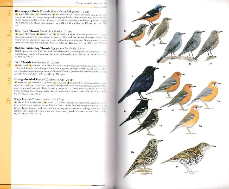 field guide to the birds of korea